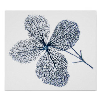 Impresión esquelética del ~ de la flor