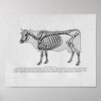 Impresión esquelética del vintage de la anatomía póster