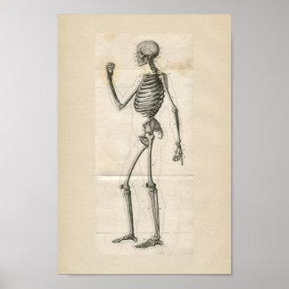 Impresión esquelética humana de la anatomía del posters