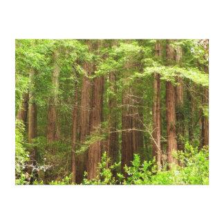 Impresión estirada árboles de la lona de la secoya impresiones en lona estiradas