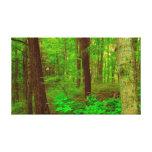 Impresión estirada bosque de la lona impresión de lienzo