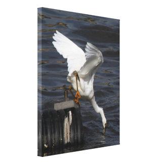 Impresión estirada del Egret nevado Impresión En Lona