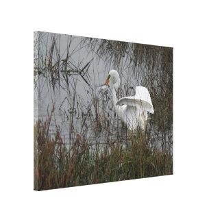Impresión estirada gran Egret Impresiones En Lona