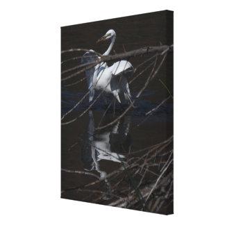 Impresión estirada gran Egret Impresión En Lona Estirada