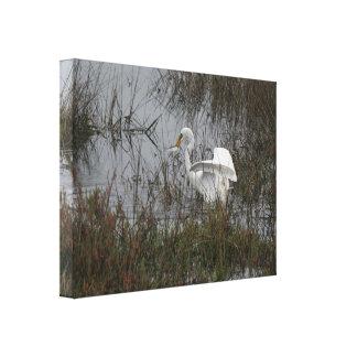 Impresión estirada gran Egret Impresion En Lona