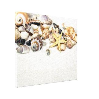 Impresión estirada Seashells de la lona Lona Envuelta Para Galerías