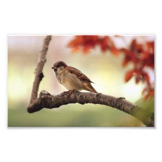 Impresión eurasiática de la foto del gorrión de ár