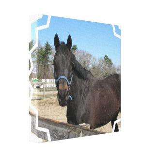 Impresión excelente de la lona del caballo impresión en lona