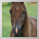 Impresión excelente del caballo de raza impresiones