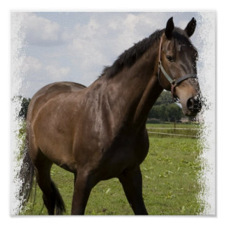 Impresión excelente del caballo posters