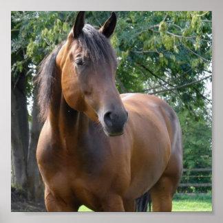 Impresión excelente del poster del caballo de la b