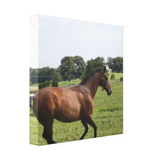 Impresión excelente galopante de la lona lienzo envuelto para galerías
