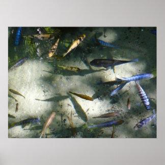 Impresión exótica del estanque de peces posters