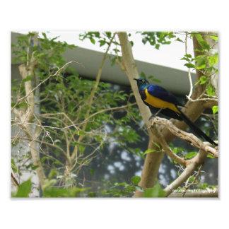 Impresión exótica del pájaro de la fotografía de D Arte Con Fotos