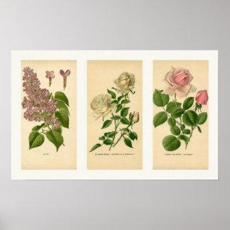 Impresión floral botánica del collage del vintage impresiones