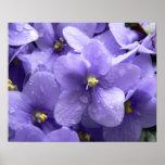 Impresión floral de la macro de las violetas afric