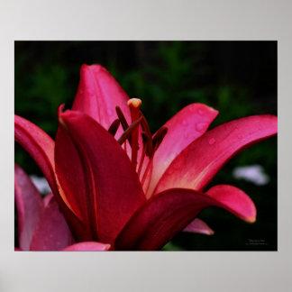 Impresión floral del poster del lirio rojo macro
