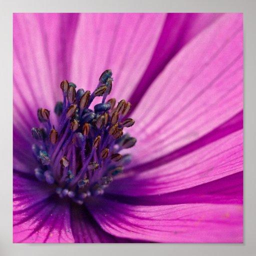 Impresión floral púrpura de la lona póster