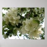 Impresión floreciente del manzano impresiones