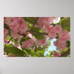 Impresión floreciente doble del cerezo III Poster