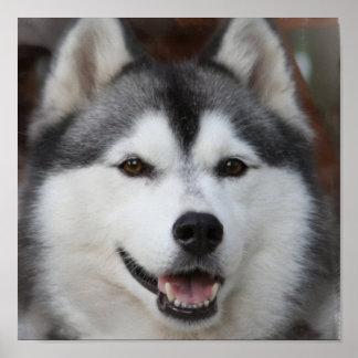 Impresión fornida del perro póster