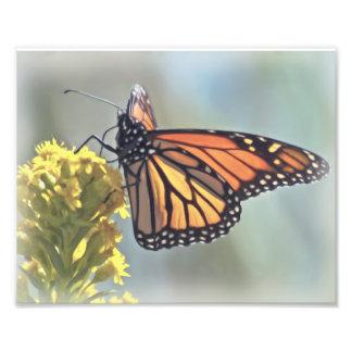Impresión fotográfica de la mariposa de monarca cojinete