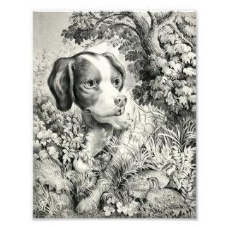 Impresión fotográfica del perro