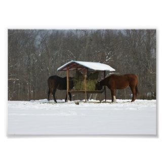 Impresión fotográfica feliz de los caballos 5x7 fotografías
