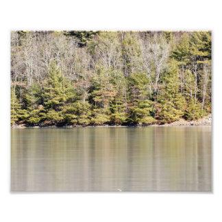 Impresión fotográfica reflexiva de los pinos 10x8 cojinete