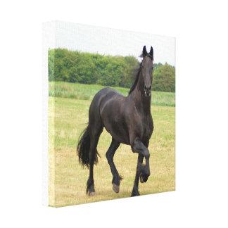 Impresión frisia de la lona del caballo impresion en lona