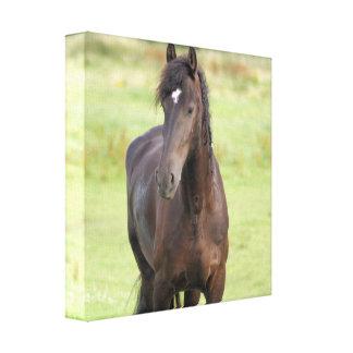 Impresión frisia dulce de la lona del caballo lienzo envuelto para galerias