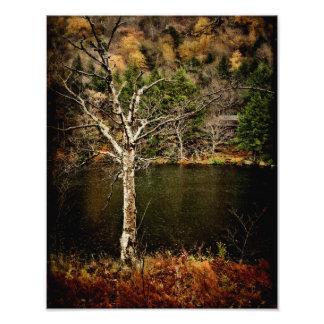 Impresión-Fuerza de la foto en ser solo Fotografías