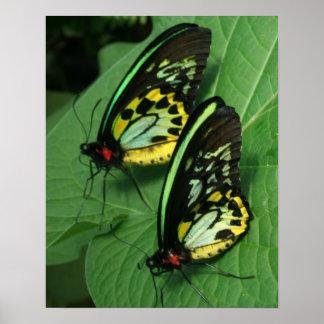Impresión gemela de la lona de las mariposas poster