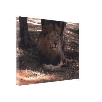 Impresión grande de la foto de la fauna de cinco g impresion en lona