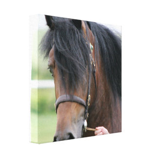 Impresión grande de la lona del caballo de proyect lona envuelta para galerías