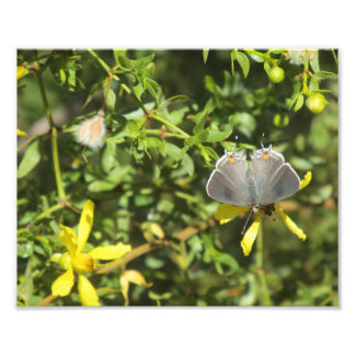 Impresión gris de la foto de la mariposa de Hairst