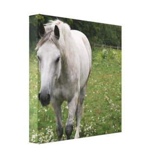 Impresión gris de la lona del caballo impresiones de lienzo