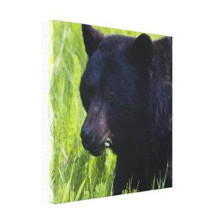 Impresión hambrienta de la lona del oso negro lienzo envuelto para galerías