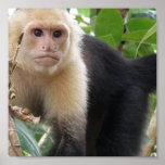 Impresión hecha frente blanca del poster del mono