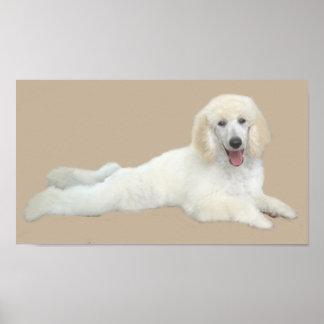 Impresión hermosa blanca del caniche impresiones