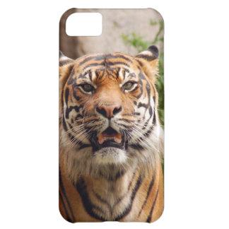 Impresión hermosa de la cara del tigre
