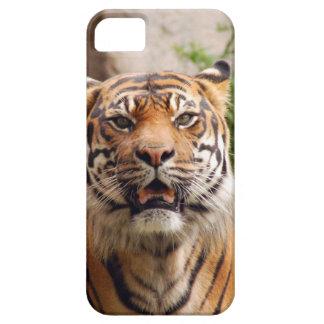 Impresión hermosa de la cara del tigre iPhone 5 Case-Mate cárcasa