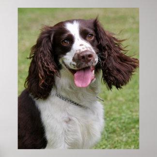 Impresión hermosa de la foto del perro del perro d poster