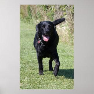 Impresión hermosa de la foto del perro negro del l impresiones