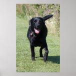 Impresión hermosa de la foto del perro negro del l póster