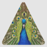 Impresión hermosa de las plumas del pavo real y de calcomanías trianguladas