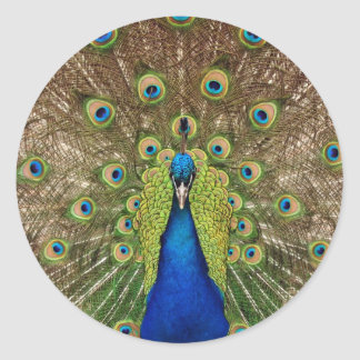 Impresión hermosa de las plumas del pavo real y de pegatina redonda
