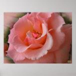Impresión hermosa del arte de la flor de la impres poster