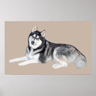 Impresión hermosa del husky siberiano póster