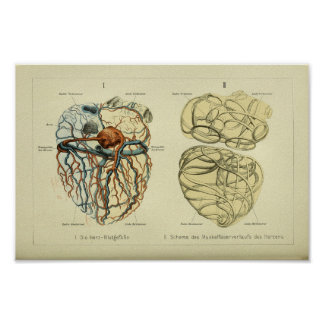 Impresión humana 1886 de la anatomía del corazón póster
